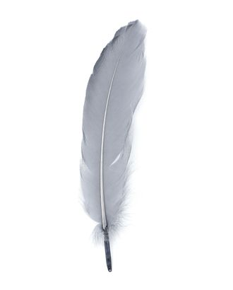 Перо голубя дл.15 см арт. ППР-8-20-33646.023