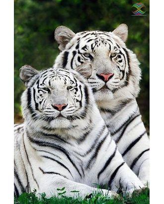 Алмазная мозаика Ah0945 Тигры альбиносы 40х60 арт. МГ-10116-1-МГ0671520