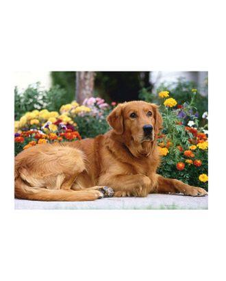Картина по номерам с цветной схемой на холсте Molly Золотистый ретривер (18 цветов) 30х40 см арт. МГ-96339-1-МГ0859774