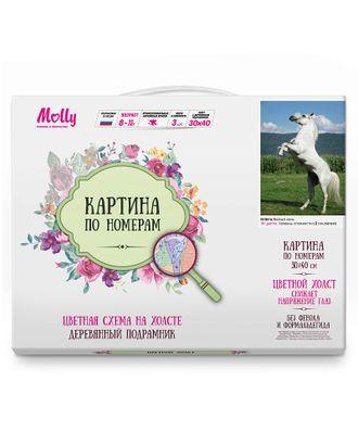 Картина по номерам с цветной схемой на холсте Molly Белый конь (19 цветов) 30х40 см арт. МГ-96398-1-МГ0859785