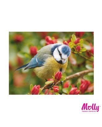 Картины по номерам Molly Синичка (18 цветов) 15х20 см арт. МГ-96640-1-МГ0910185
