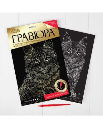 """Гравюра """"Котёнок мейн-кун"""" с металлическим эффектом золота А4 арт. СМЛ-3445-1-СМЛ2142272"""