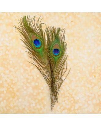 Набор перьев павлина для декора 2 шт. арт. СМЛ-40970-1-СМЛ0003099217
