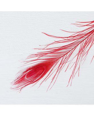 Перо павлина для декора арт. СМЛ-23817-9-СМЛ3496275