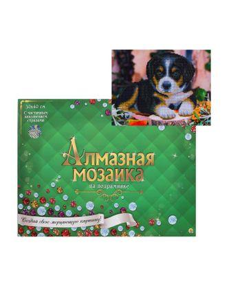 Алмазная мозаика блестящая 30х40 см, с подрамником, с частичным заполнением, 12 цветов «Маленький забавный щенок» арт. СМЛ-122831-1-СМЛ0005441749