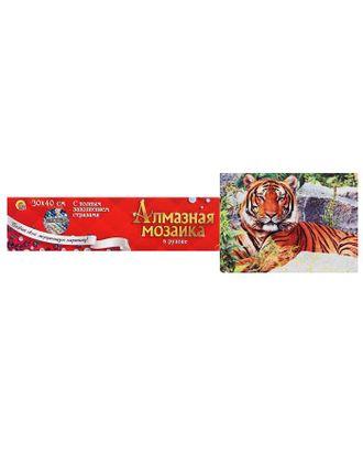 Алмазная мозаика блестящая 30х40 см, без подрамника, с полным заполнением «Тигр на камнях» арт. СМЛ-122849-1-СМЛ0005441768